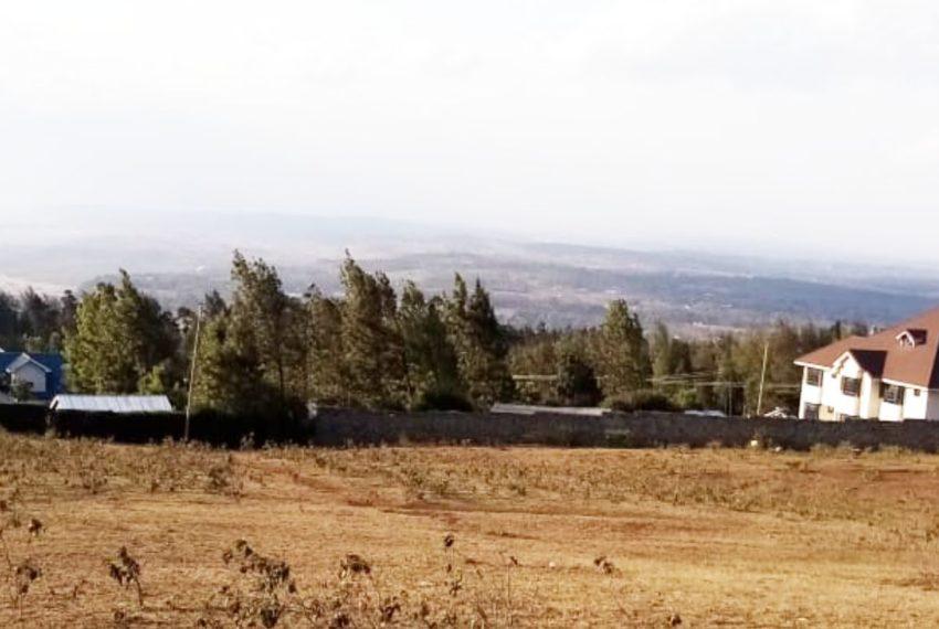 Ngong_Kibiku (7)