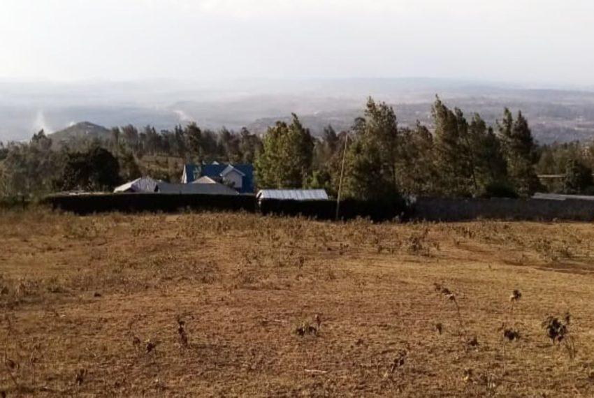 Ngong_Kibiku (9)